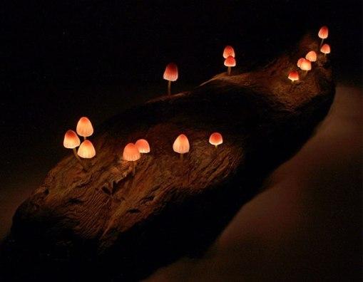 LED Mushroom by Yukio Takano